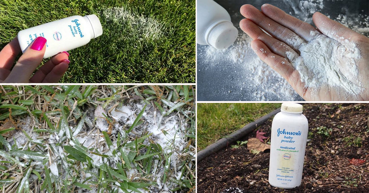13 Effective Baby Powder Uses And Hacks In The Garden