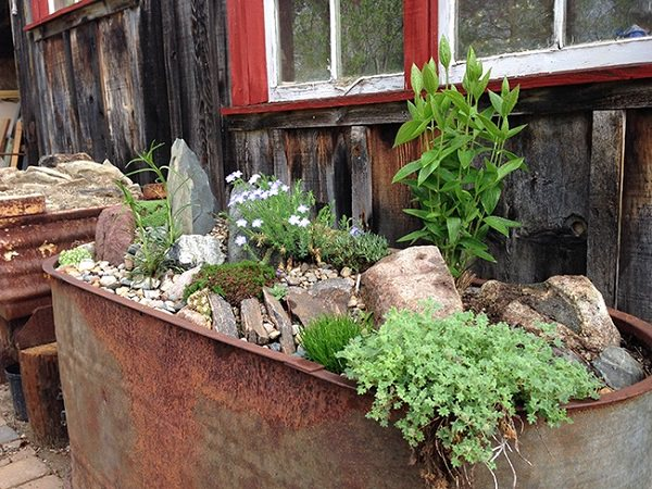 Alpine Garden From Galvanized Tubs