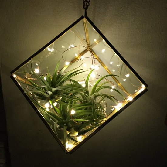 7 Air Plant Care Tips You Should Know!