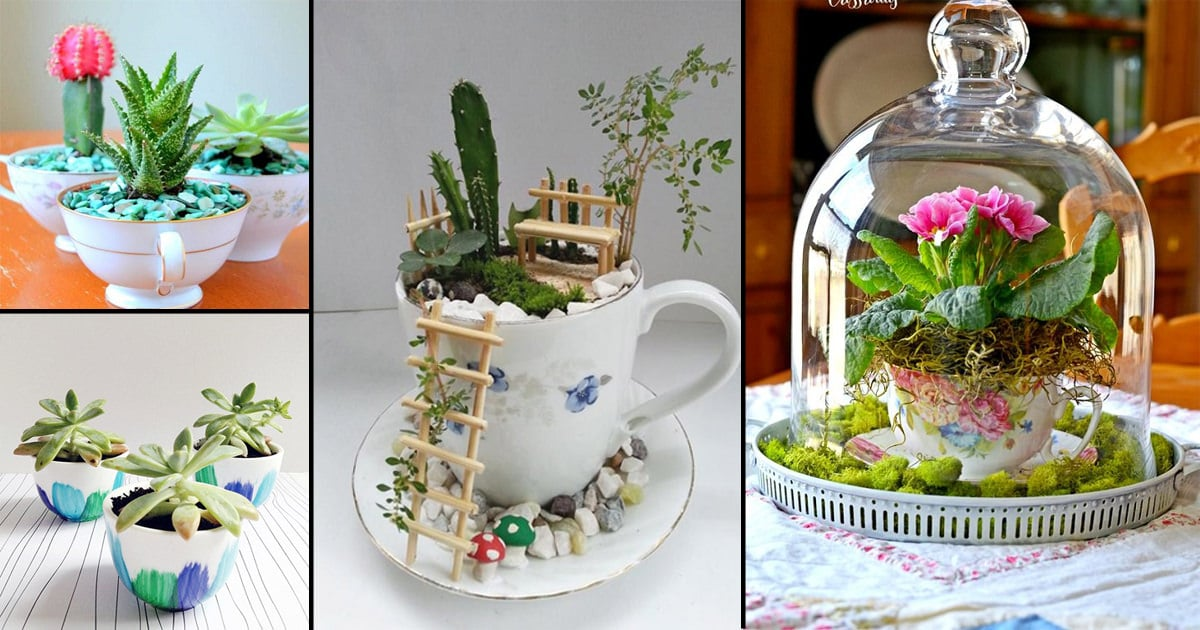 19 Cute Diy Teacup Garden Ideas Creative Teacup Planters