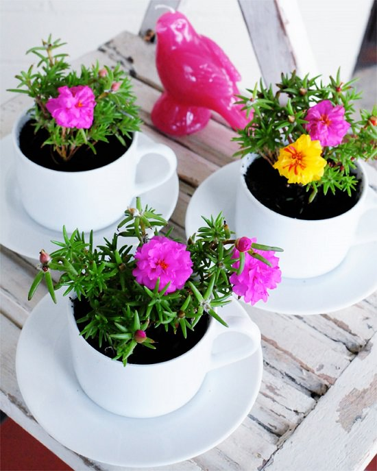 Mother S Day Container Garden Ideas: 19 Cute DIY Teacup Garden Ideas