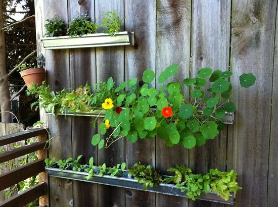 dress up your boring wooden fence or walls using aluminum gutters following this idea you can grow shallow rooted annuals greens herbs and plants - Garden Ideas Diy