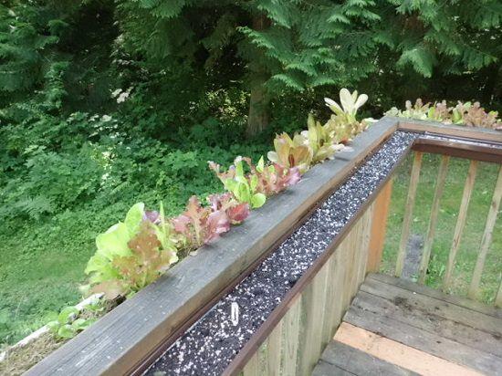 13 Vertical Diy Rain Gutter Garden Ideas For Small Spaces
