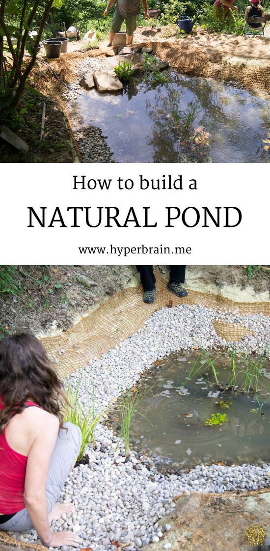 21 diy water pond ideas diy water gardens for backyards for How to build a coy pond with waterfall