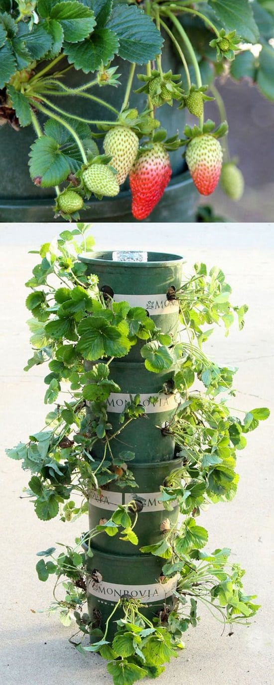 9 creative diy upcycle ideas for the garden balcony garden web 3 strawberry tower out of recycled materials workwithnaturefo