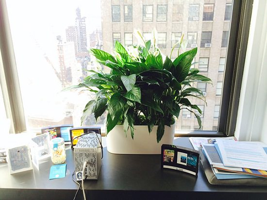15 Best Office Desk Plants That Don T Need Space Balcony