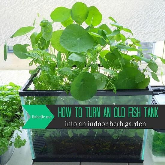 8 diy fish tank planter terrarium ideas balcony garden web for Fish tank planter