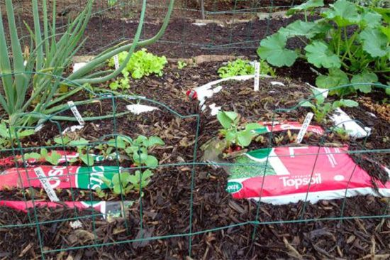 11 Diy Uses Of Plastic Bags In The Garden That Are