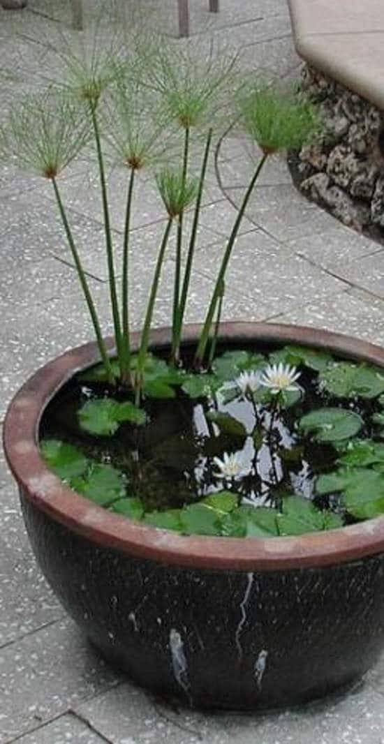 13 Peaceful Diy Container Water Garden Ideas For Container Gardeners Balcony Garden Web