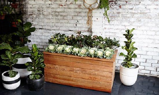 Diy Wooden Flower Boxes
