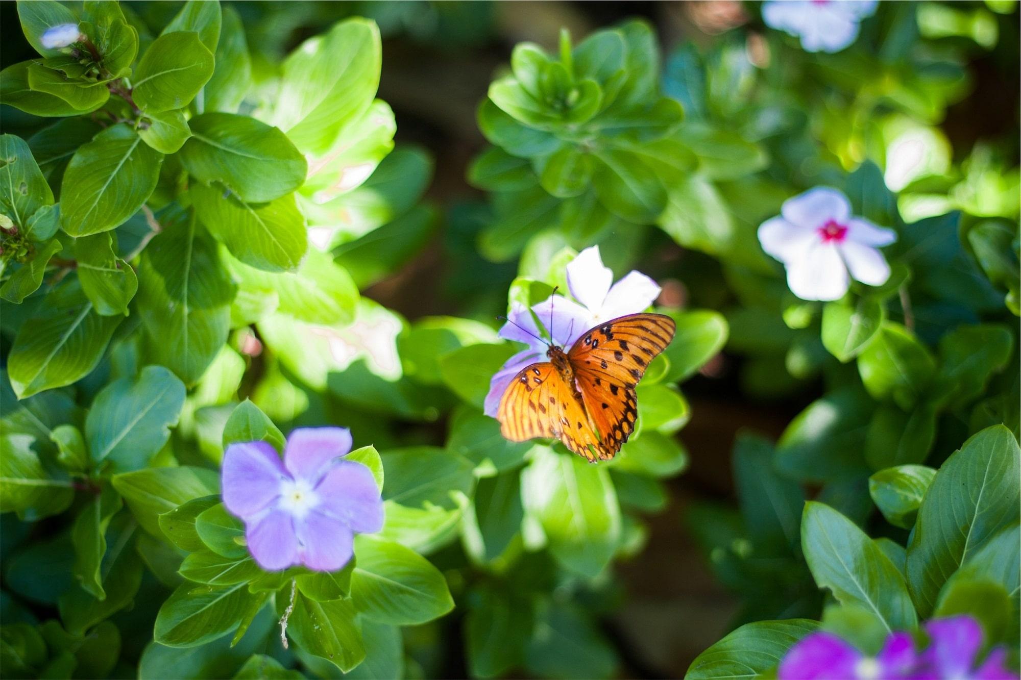 Flowers That Attract Butterflies And Birds Balcony Garden Web