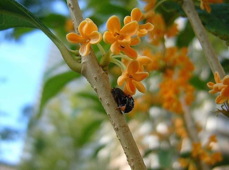 Most Fragrant Flowers According To Gardeners Balcony