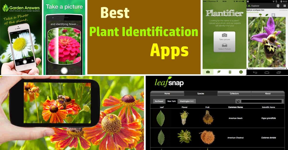 Best Plant Identification Apps | Balcony Garden Web