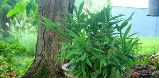 How to control invasive plants