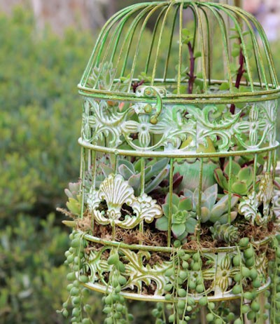how to succulent in birdcage