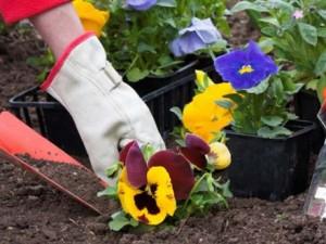 Gardening-Help