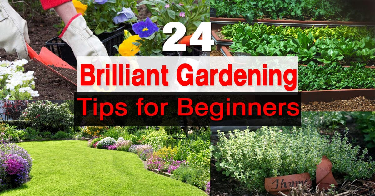 How to Design the Garden for Beginners