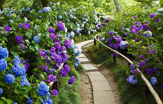 Landscaping With Hydrangeas 15 Garden Design Ideas