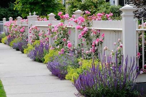 Landscaping With Lavender 7 Garden Design Ideas