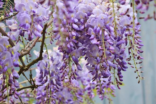 most poisonous flowers (8)_mini