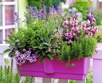 plants for south facing balcony_mini