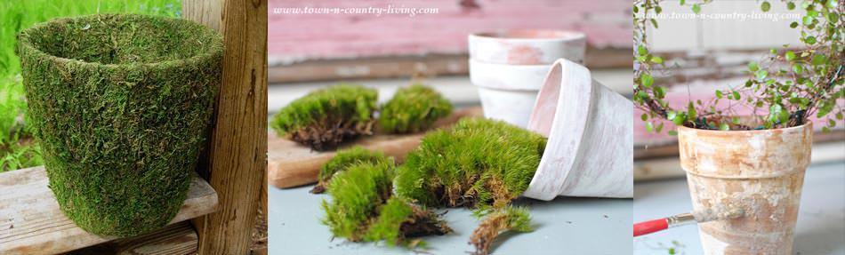 Moss covered Pot diy
