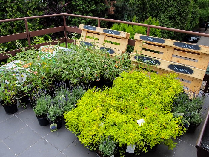 Best terrace roof garden plants you should grow for A gardener is planting two types of trees