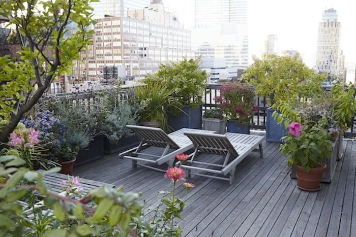 Balcony Privacy Plants