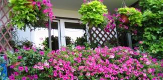 best balcony plants