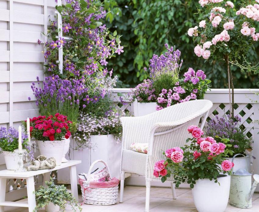 Superieur Beautiful Balcony Rose Garden