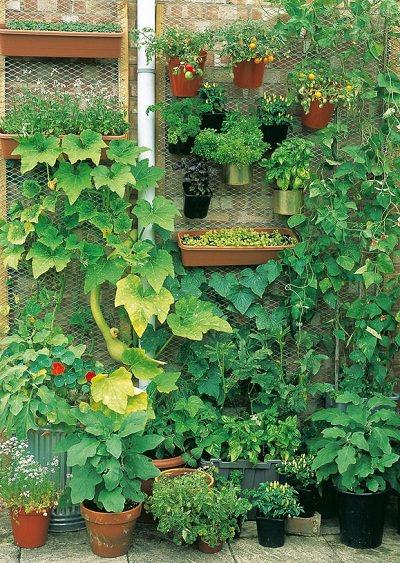 How to Make Terrace Vegetable Garden | Complete Tutorial