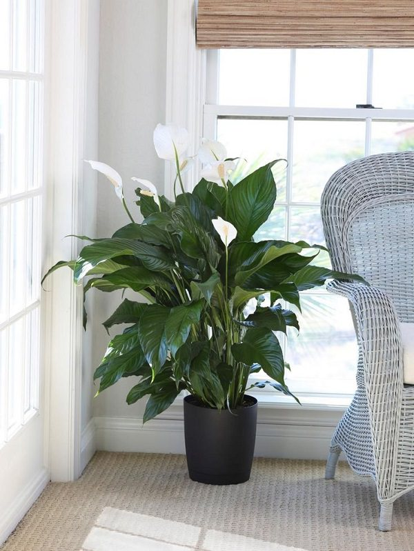 Plants that Grow without Sunlight   17 Best Plants to Grow ...