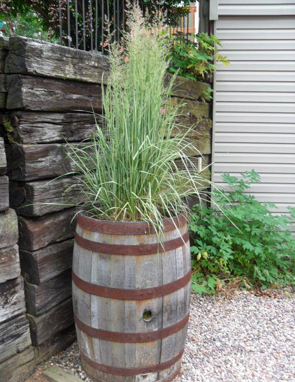 Small Decorative Grasses