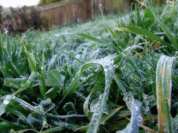 lawn care for winter