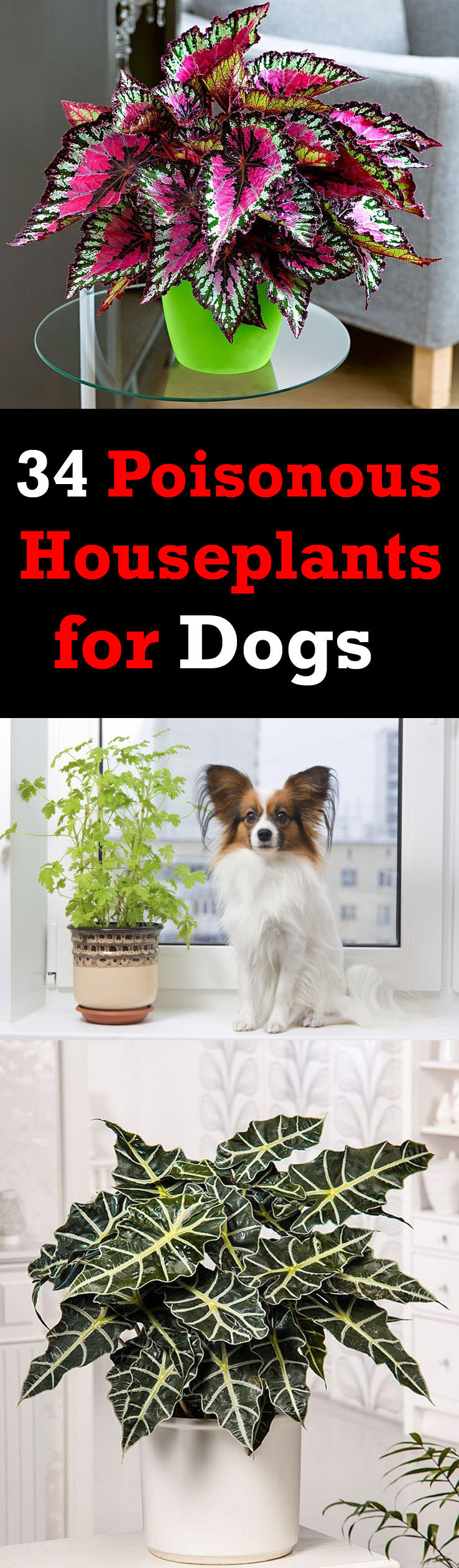 34 poisonous houseplants for dogs plants toxic to dogs balcony there are poisonous houseplants for dogs and cats some are mildly poisonous and some are izmirmasajfo