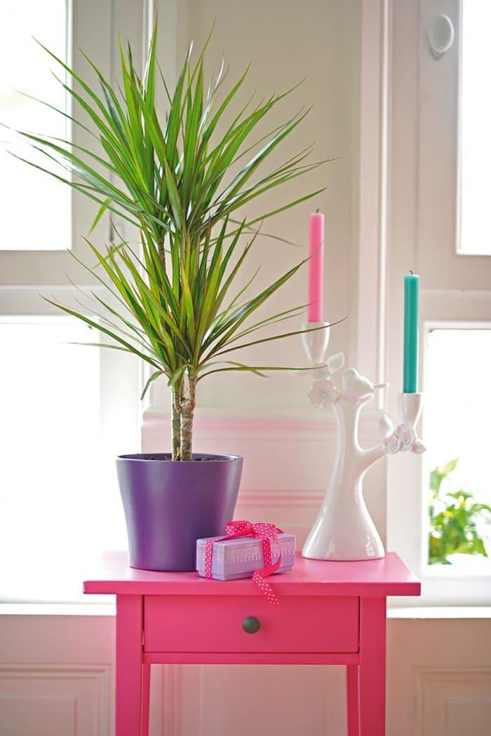 99 Great Ideas to display Houseplants | Indoor Plants ...