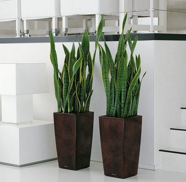 19 Easiest Houseplants You Can Grow Without Care Balcony