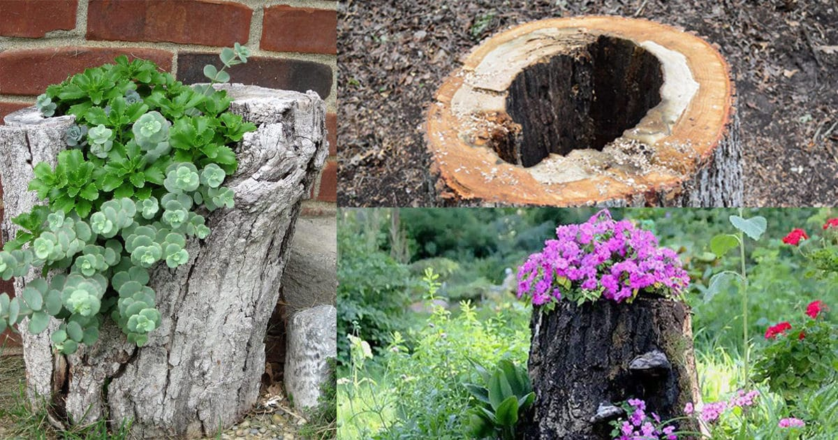How To Make A Tree Stump Planter In 4 Steps