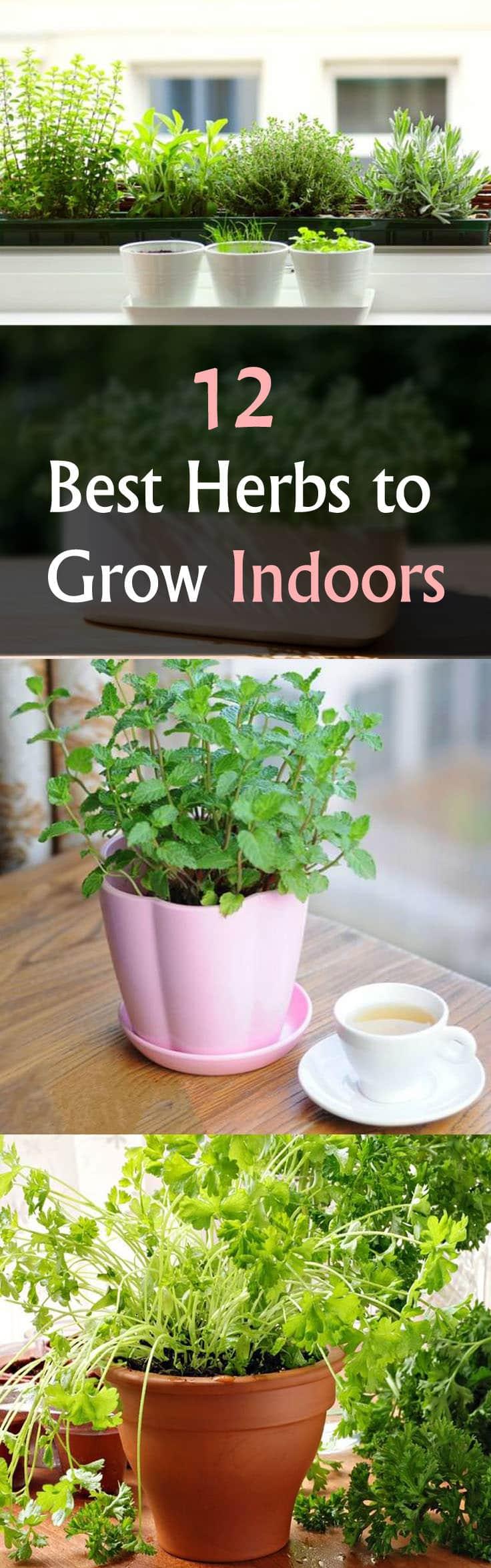 12 best herbs to grow indoors indoor herbs balcony - Herbs that can be grown indoors ...