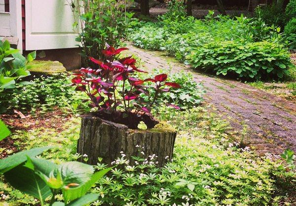 19 Blazing Tree Stump Planter Ideas That Ll Impress You