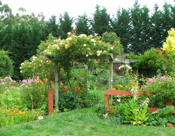 Ten Top Tips For Small Shady Urban Gardens: Climbing Plants For Pergolas And