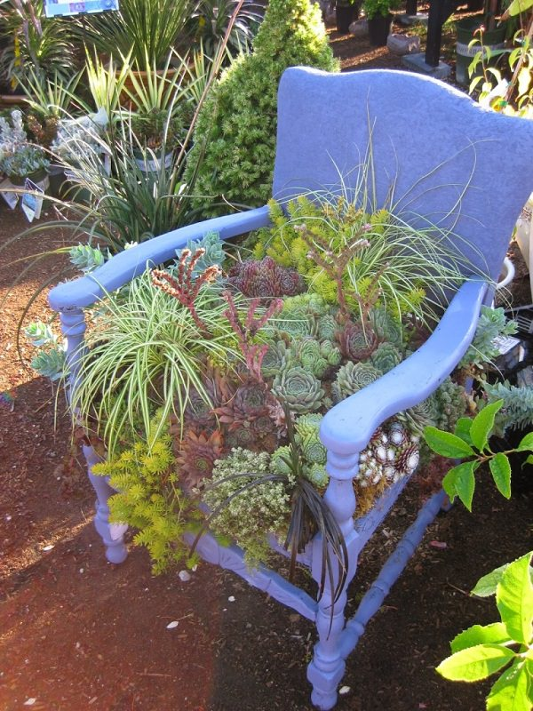 succulent chair