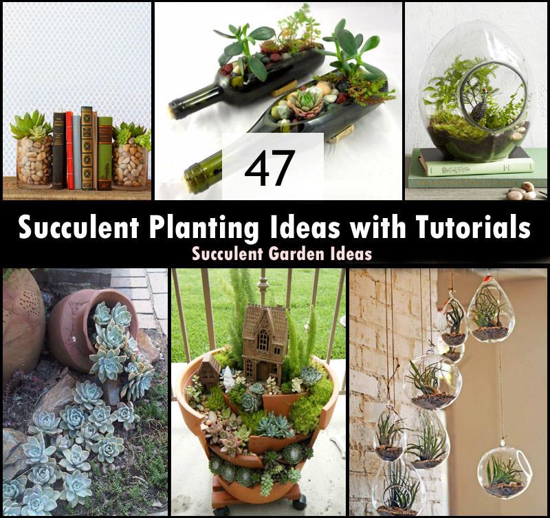 47 Succulent Planting Ideas With Tutorials Succulent Garden Ideas