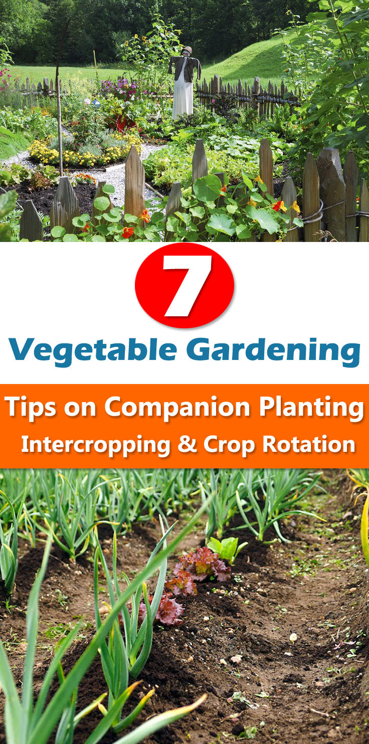 Ideas For Planting Succulents: 7 Vegetable Gardening Tips On Companion Planting