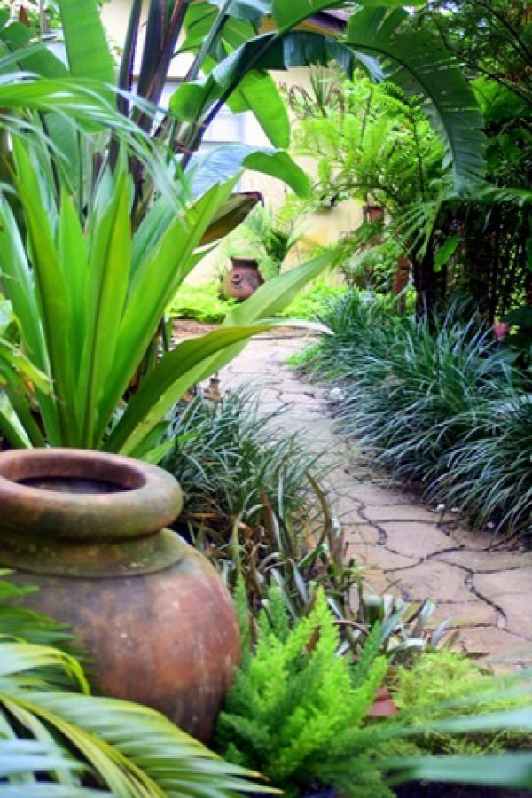 14 Cold Hardy Tropical Plants to Create a Tropical Garden ... on Tropical Backyard Landscaping  id=54203