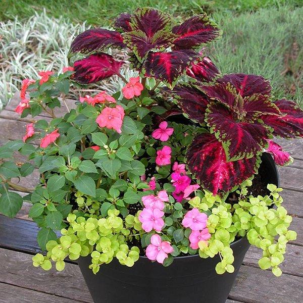 8 Stunning Container Gardening Ideas: 10 Tips To Start A Balcony Flower Garden