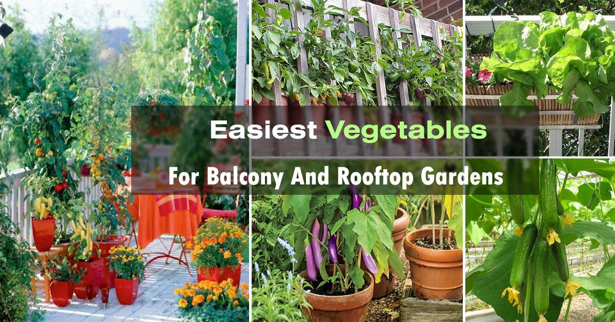 Easy Container Vegetables For Balcony Rooftop Garden Vegetable Gardening Web