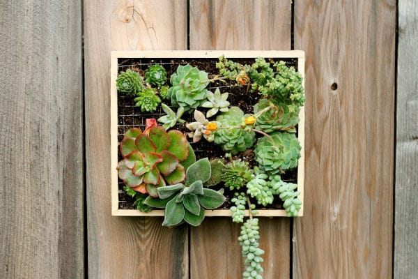 Keep The Succulent Wall Planter On A Table, Near A Windowsill, In Your  Living Room, Somewhere Where It Will Receive Some Sun Or Indirect Sunlight.