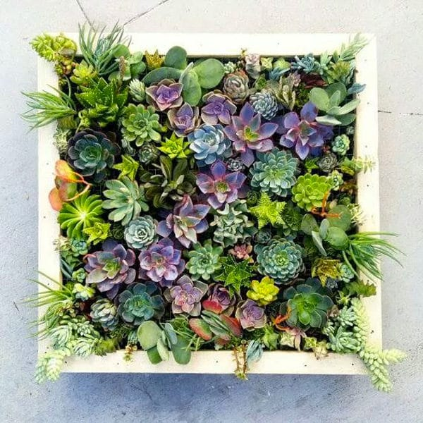 Succulents Are Easiest Plants To Grow On Earth. They Are Not Demanding And  Most Of Them Grow In Severe Conditions, Plus They Come In Different Colors,  ...