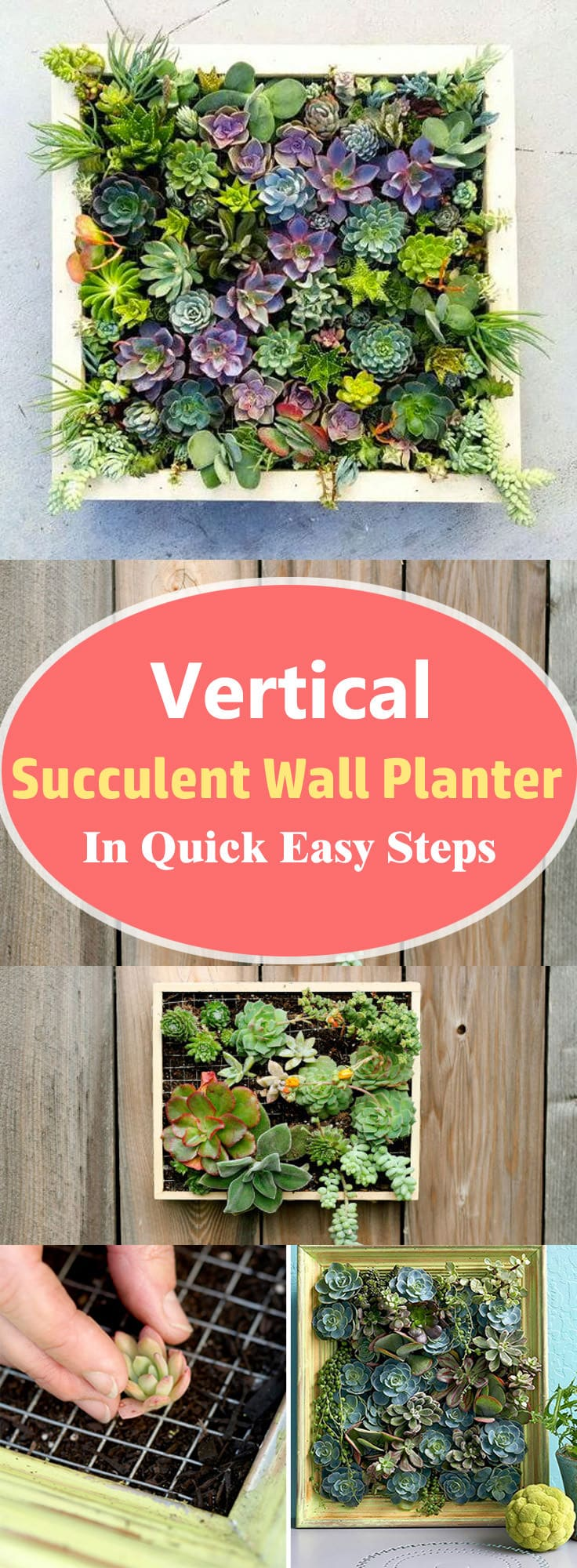 Vertical Succulent Wall Planter In Quick Easy Steps | DIY Succulent ...